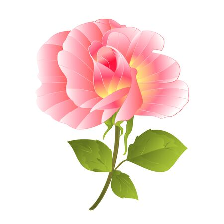 Pink rose rosebud with orange center watercolor  on a white background vector illustration editable hand draw