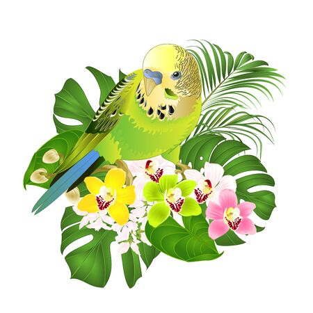 Parakeet with tropical palm on white