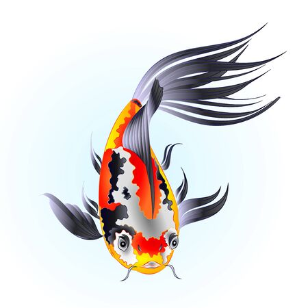 Fish beautiful  Japanese  carp koi  traditional on water blue background watercolor vintage vector illustration editable hand draw