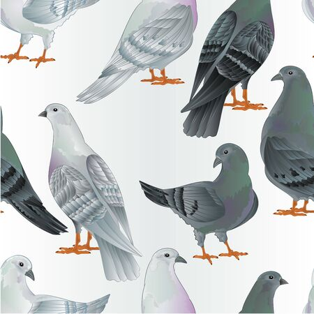 Seamless texture  carriers pigeons white and gray  birds vector  animals illustration for design hand draw