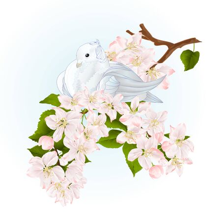 Bird white small dove pigeon on an apple tree branch with flowers spring background watercolor vintage vector illustration editable hand draw