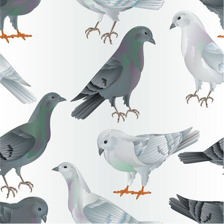 Seamless texture white and gray  Carriers pigeons domestic breeds sports intelligent birds vintage  vector  animals illustration for design hand draw