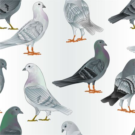 Seamless texture gray and  white Carriers pigeons domestic breeds sports intelligent birds vintage  vector  animals illustration for design hand draw Ilustrace