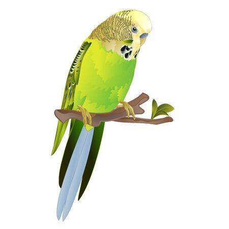 Bird Budgerigar, green pet parakeet  or budgie or shell parakeet home pet on a white background vintage vector illustration editable hand draw Stock Illustratie