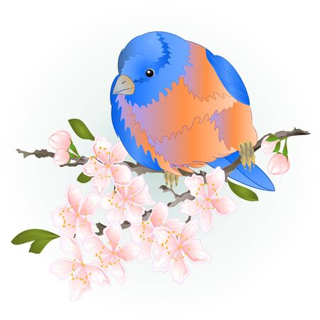 Bird small  thrush  Bluebird  watercolor on a sakura cherry branch pink  flower with leaves blue background  vintage vector illustration editable hand draw Çizim