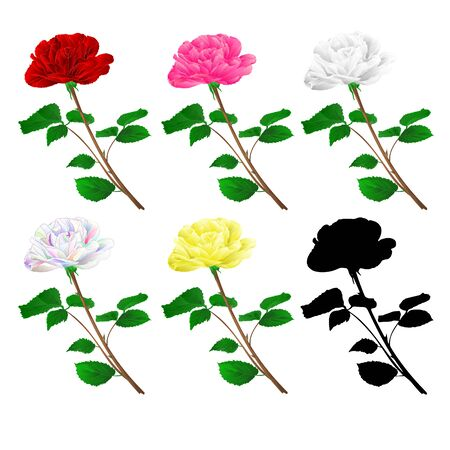 Various  red pink white yellow rose stem with leaves natural  and silhouette vintage on a white background vector illustration editable hand draw