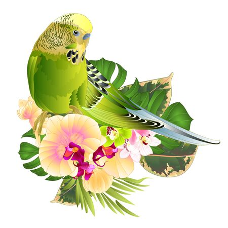 Budgerigar, green pet parakeet  or budgie or shell parakeet home pet with tropical flowers yellow orchid Phalaenopsis and  cymbidium palm,philodendron  watercolor vintage vector illustration editable hand draw Ilustrace