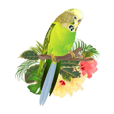 Green  Budgerigar, home pets ,green  parakeet  on a branch bouquet with tropical flowers hibiscus, palm,philodendron watercolor vintage vector illustration editable hand draw