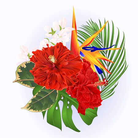 Tropical flowers bouquet with red hibiscus and   Strelitzia reginae  palm monstera  watercolor vintage vector illustration editable hand draw
