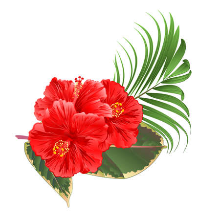 Tropical flowers  floral arrangement, with pink hibiscus  palm ficus  on a white background watercolor vintage vector editable hand draw Иллюстрация
