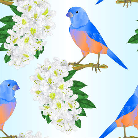 Seamless texture small bird Bluebird  thrush and white rhododendron watercolor spring background vintage vector illustration editable hand draw