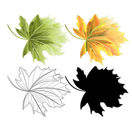 Four Colored leaves Maple  red and green natural outline and silhouette  vintage vector botanical illustration editable hand draw