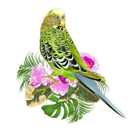 Budgerigar green  pets parakeet  on a bouquet with tropical flowers purple and white orchid phalenopsis  palm,philodendron  nature  background vintage vector illustration editable hand draw