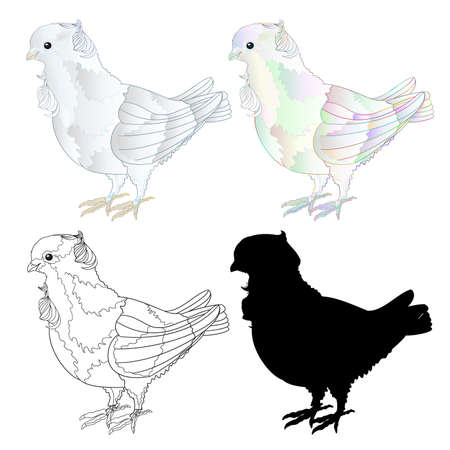 Ornamental white dove pigeon cute small birds outline and silhouette  on a white background  vintage vector illustration editable Hand draw