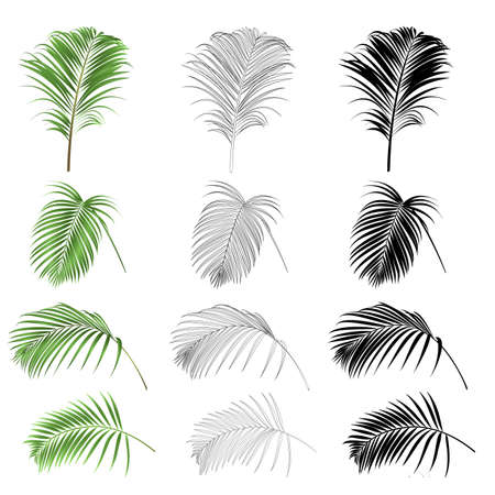 Decoration  tropical house plant leaves palm   nature  outline and silhouette set vintage vector illustration editable hand drawn