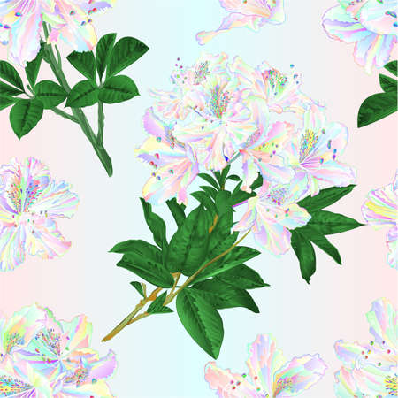 Seamless texture branches colorful Rhododendron branch  flowers  mountain shrub on a white background watercolor vintage vector illustration editable hand draw