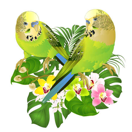 Parakeets green Budgerigars home pets ,or budgie or shell parakeet  and Orchids cymbidium with tropical palm and philodendron   watercolor vintage vector illustration editable hand draw Иллюстрация