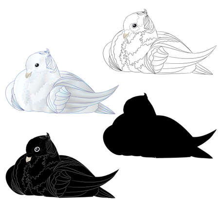 White dove  ornamental pigeon cute small birds outline and silhouette  on a white background  vintage vector illustration editable Hand draw
