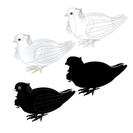 Dove white ornamental pigeon cute small birds outline and silhouette  on a white background  vintage vector illustration editable Hand draw