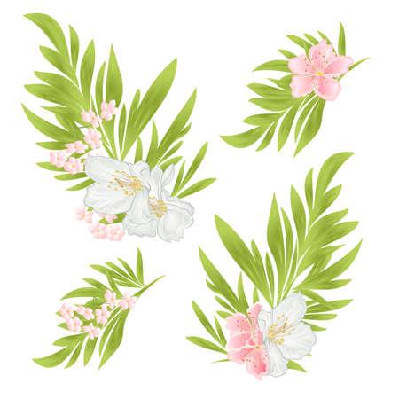 Ornamental leaves and jasmine and sakura on a white background  watercolor vintage  vector editable illustration hand drawn Illustration