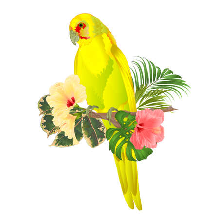 Parrot in Yellow bird Indian Ringneck Parrot alexander in Yellow on branch with tropical flowers hibiscus, palm,philodendron watercolor on a white background vintage vector illustration editable Hand draw