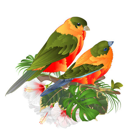 Tropical birds cute small  funny  birds and white hibiscus watercolor style on a white background vintage vector illustration editable hand draw Vectores