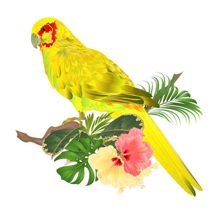Bird Parrot in Yellow Indian Ringneck  on branch with tropical flowers hibiscus, palm,philodendron watercolor on a white background vintage vector illustration editable Hand draw