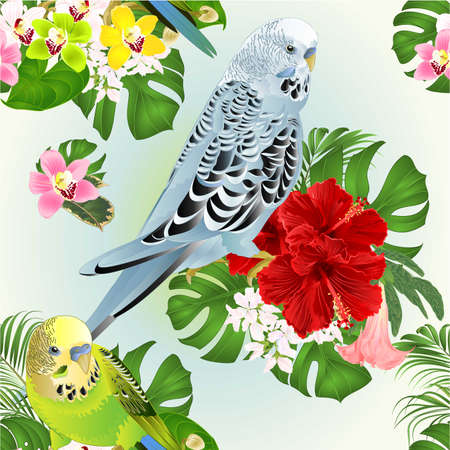 Seamless texture tropical parakeets blue and green Budgerigars home pet ,   or budgie or shell parakeet  and Orchids cymbidium with red hibiscus palm and philodendron   watercolor vintage vector illustration editable hand draw