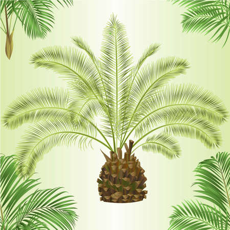 Seamless texture decoration palmae date and palm house plant  tropical plant natural on a white background watercolor vintage vector illustration editable hand drawn