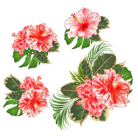 Bouquet with tropical flowers set floral arrangement with beautiful white and red hibiscus corrugated palm,philodendron and ficus set vintage vector illustration  editable hand draw