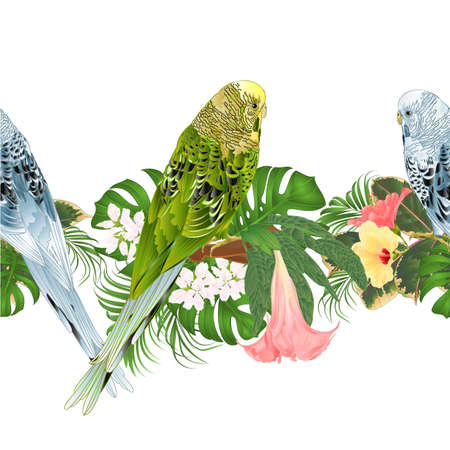 Tropical border seamless background green and blue Budgerigars, pet parakeets  and various hibiscus and Brugmansia vector Illustration for use in interior design, artwork, dishes, greeting card
