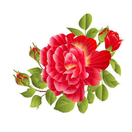 Bouquet  red rose and buds orange center on a white background watercolor vintage vector botanical illustration editable hand draw