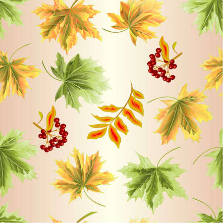 Seamless texture colored leaves Maple natural and rowanberry vintage vector botanical illustration editable hand draw