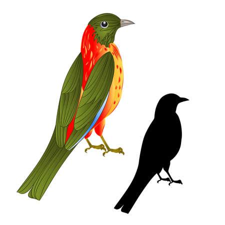 Tropical songbird wildlife bird vintage vector animal illustration editable hand draw Stock Illustratie