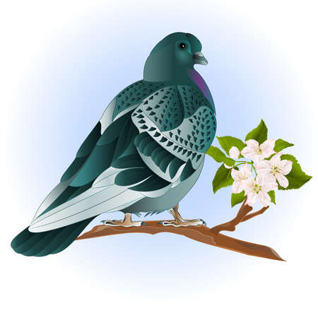 Cute small bird  ornamental young pigeon on a twig of apple tree with flowers  vintage vector illustration editable Hand draw