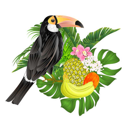 Exotic african bird toucan black bird with white breast, large yellow beak with black tip, long tail on a white background watercolor vintage vector illustration editable hand draw Ilustracja
