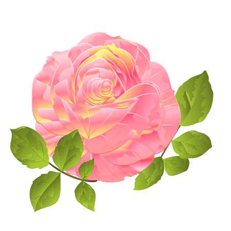 Pink rose orange center stem  on a white background watercolor vintage vector botanical illustration editable hand draw