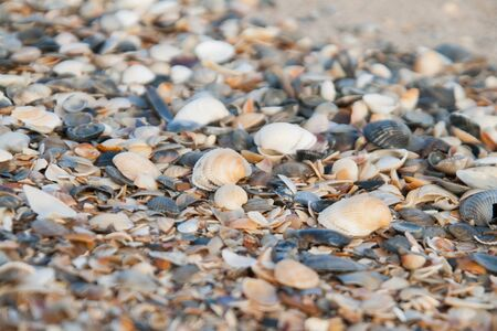 Background of colored sea shells.