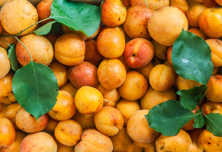 solid background: Fresh apricots solid texture seamless background.