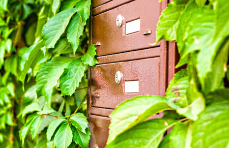 residential tree service: mailboxes on the wall between the grape leaves.