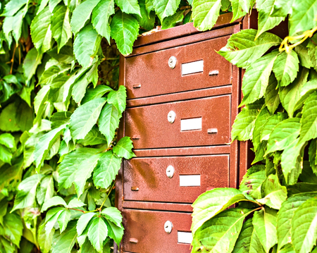 mailboxes on the wall between the grape leaves.