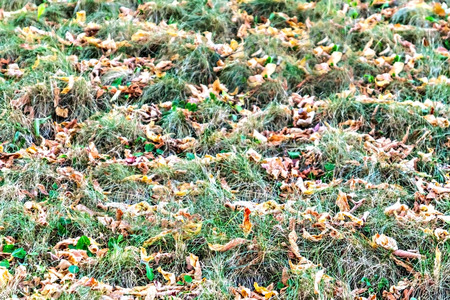 on green grass are dry leaves close up.