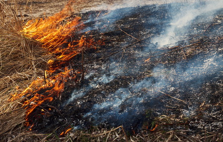 heat loss: Strong fire in the forest on the lake. A lot of smoke on the background of the trees. Ashes, and fire on dry grass, close-up. Large black burned area on the river bank
