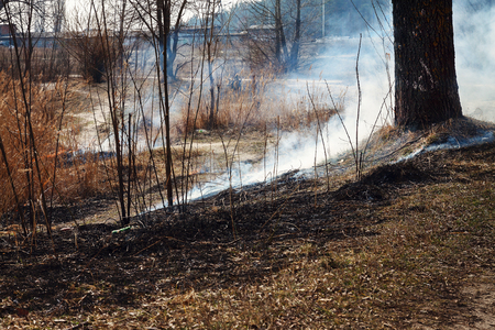 Strong fire in the forest on the lake. A lot of smoke on the background of the trees. Ashes, and fire on dry grass, close-up. Large black burned area on the river bank