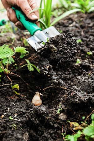 A womans hand digs soil and soil with a shovel. Close-up, Concept of gardening, gardening. Stock Photo