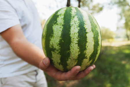 A young man is holding a whole watermelon. The concept of healthy nutrition and vegetarianism. Stock Photo