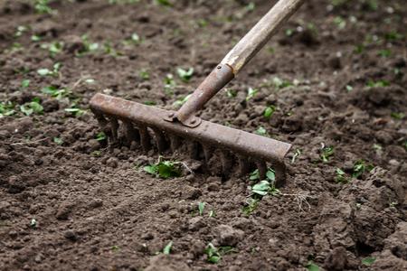 Na ziemi leżą grabie ogrodowe. Zbliżenie, koncepcja ogrodnictwa.