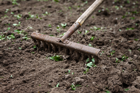 On the soil lie the garden rake. Close-up, Concept of gardening.