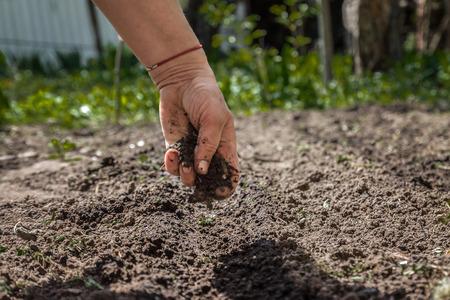 La mano di una donna anziana versa la terra sulla semina. Il concetto di giardinaggio, vita sulla terra, stile. Archivio Fotografico