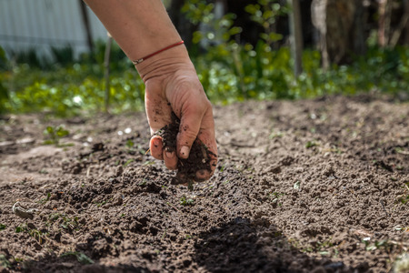 The hand of an elderly woman pours the earth on sowing. The concept of gardening, life on earth, style. Archivio Fotografico - 95909652